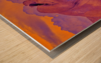 White Rhino orange purple Wood print