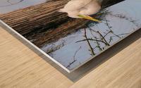 Mating Season - Great Egrets II Wood print