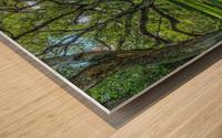 Oak Alley Plantation - HDR Wood print