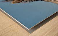 Zebra 5091 Wood print