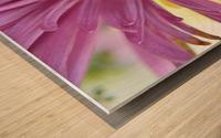 Fuscia-Colored Aster Wood print