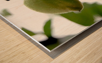 The Plum Wood print