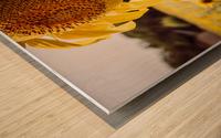 Sunflower with Bee Wood print