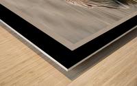 Brown Pelican II - HDR Wood print