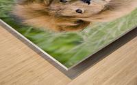 Simba Wood print