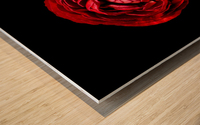 Anemone_3 Wood print