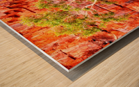 Pink Delight - Ormiston Gorge Wood print