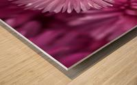 Pink Ice Plant Flowers Wood print