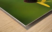 Great Coneflower Wood print