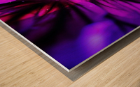 Abstract Pop Color Flower Photography 38 Wood print