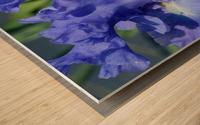 Metoleus Blue Bearded Iris Wood print