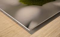 Purete Wood print
