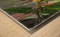 Hawaiian Orchids Color Pencil  Wood print