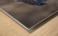 Great Grey Owl - Hanging on Wood print