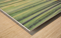 Aspen Trees in movement Wood print