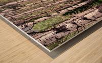 Aspens In Banff National Park at Muleshoe Wood print