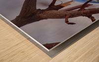 Capturer Wood print