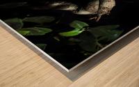 old bonsai black background Wood print