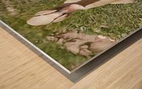 Buff Orpington Duck Wood print