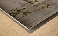 LetterBox Wood print