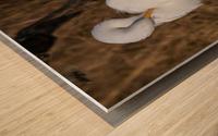 Great White Egret ap 2767 Wood print