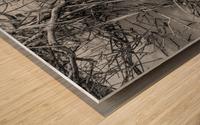 Bird Tracks ap 1605 B&W Wood print