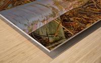 Barn Trolley ap 2241 Wood print