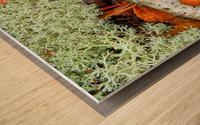 Pin Oak Leaf ap 1557 Wood print
