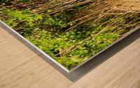 Mangrove roots Wood print