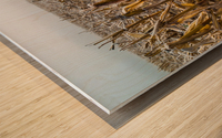 Frost ap 2031 Wood print