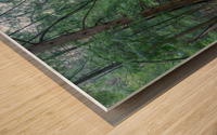 Queer Creek apmi 1638 Wood print