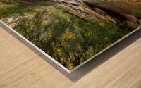 Fall Color ap 2453 Wood print