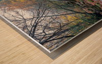 Cowanshannock Creek apmi 1962 Wood print