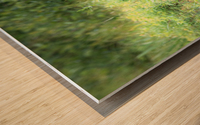 Sitting Pretty Wood print