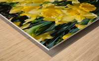 Yellow Daffodils wc Wood print