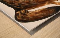 Fox Print | British Wildlife Art | A3 A4 A5 | Fox Lover Gift | Fox Illustration | Fox Painting | Fox Nursery Wall Art | British Animal Print Wood print