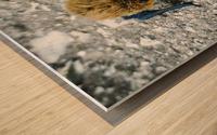 300 Carr   Wood print