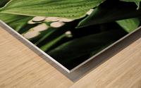 Dainty Drops Wood print
