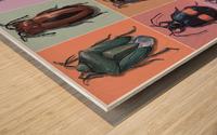 Assorted Beetles Wood print