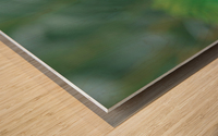 landscape_2_0046 Wood print