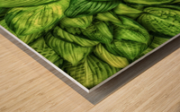 Hosta Glow Wood print