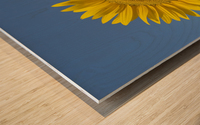 Sunflower (Helianthus Annuus) Wood print