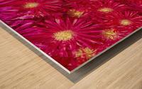 Trailing Ice Plant (Lampranthus Spectabilis) Wood print