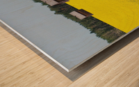 Alberta, Canada; Two Wooden Shacks In A Canola Field Wood print