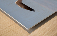 Gannet Flying Over The Water; Perce, Quebec, Canada Wood print