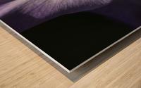 Purple gladiolus; Astoria, Oregon, United States of America Wood print