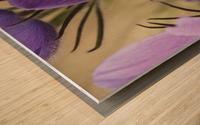 Crocus; Yukon, Canada Wood print