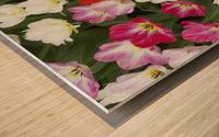 Flowers at Keukenhof Gardens; Amsterdam, Holland Wood print