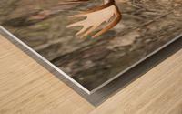 Bull moose (alces alces) in rutting season; Anchorage, Alaska, United States of America Wood print