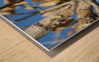 Golden Eagle VP3 Wood print